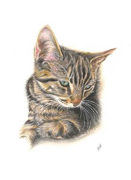 memorial-pet-portrait-cat.jpg