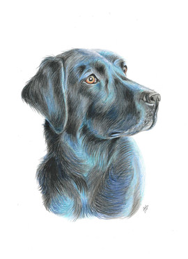 custom-pet-portrait-of-dog.jpg