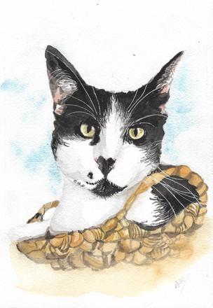 Watercolour cat portrait