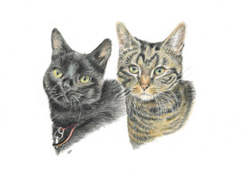 custom-pet-portrait-of-cats.jpg