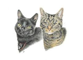 custom-pet-portrait-of-cats.jpg