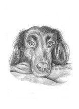 custom-pet-portrait-dog-graphite.jpg