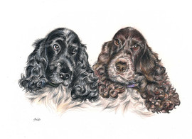 custom-pet-portrait-of-cocker-spaniel-do