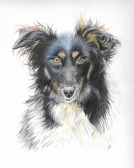custom-pet-portrait-collie.jpg
