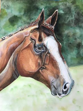 watercolour-horse-pet-portrait.JPG