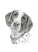 custom-spaniel-dog-pet-portrait.jpg