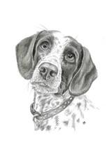 custom-spaniel-dog-pet-portrait.jpg