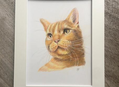 Finlay's Colour Pencil Portrait