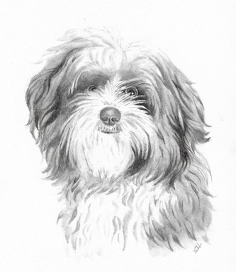 custom-pet-portrait-dog-graphite_labrado