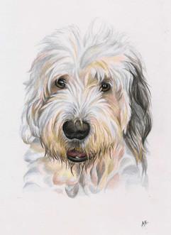 custom-portrait-of-old-english-sheepdog.