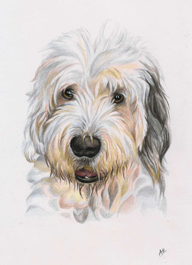 custom-portrait-of-old-english-sheepdog.