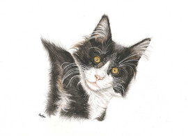 custom-cat-portrait-color-pencil.jpg