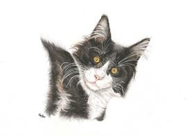 custom-cat-portrait-color-pencil.jpg