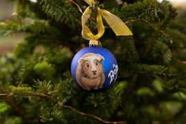 guinea-pig-custom-pet-portrait-bauble.jp