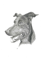 custom-dog-pet-portrait-graphite.jpg