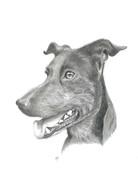 custom-dog-pet-portrait-graphite.jpg