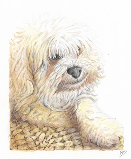 color-pencil-dog-pet-portrait.jpg
