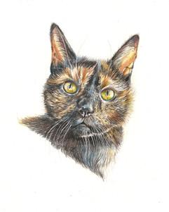 tortie-cat-pet-portrait-custom.jpg