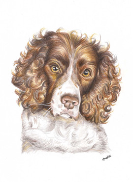 portrait-of-cocker-spaniel-dog.jpg