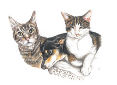 coloured-pencil-portrait-of-cats.jpg