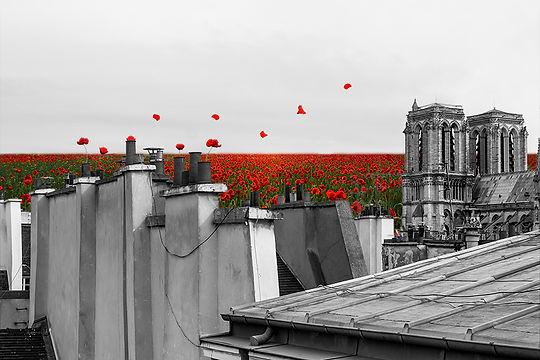 Sur les toits fleuris BD.jpg