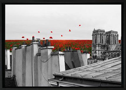 Sur les toits fleuris DIBOND ENCADRE BD.