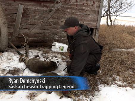 This Week On Wild TV Saskatchewan Racoons!
