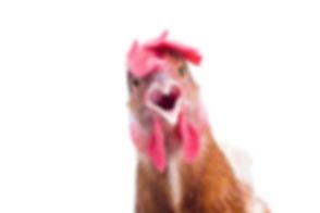 a-shocked-chicken.jpg