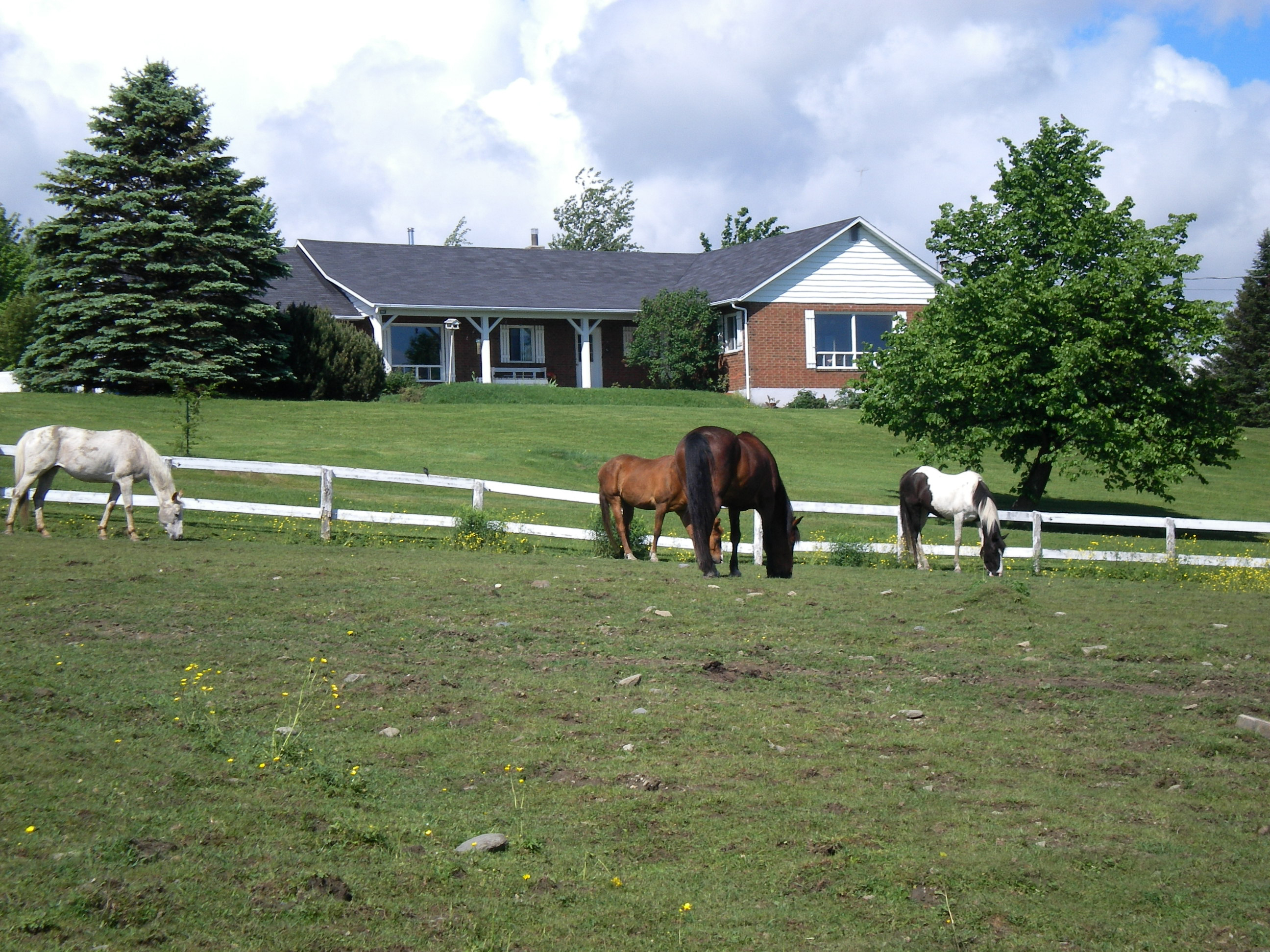 Riding lessons Eastern Townships