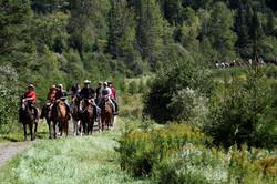 Randonnée organisée à cheval