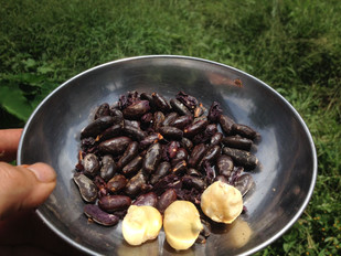Fave di cacao e frutipan