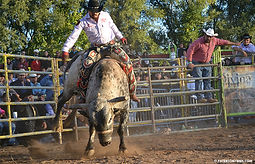 Hinchliffe rodeo.jpg
