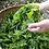 Thumbnail: Felicity Spring Tea (333g)