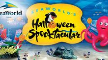 SeaWorld Orlando Spooktacular Auditions