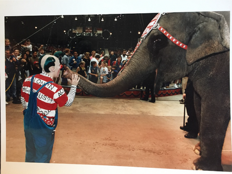 Thomas Wheaton Talks Ringling Bros. and Barnum & Bailey!
