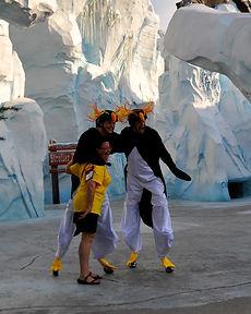 Jumping Stilt Penguins at SeaWorld