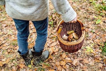 Cueillettes de champignons sous les chênes