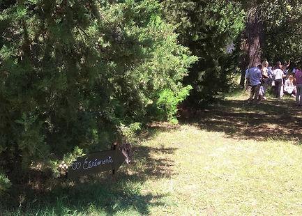 Les convives s'installent sous les arbres centenaires pour la cérémonie laïque.