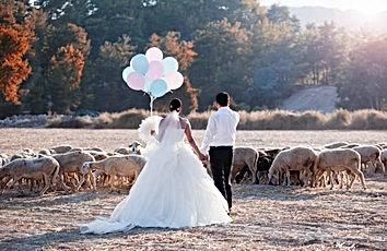 Transhumance au Domaine des Danjean pour un mariage champêtre