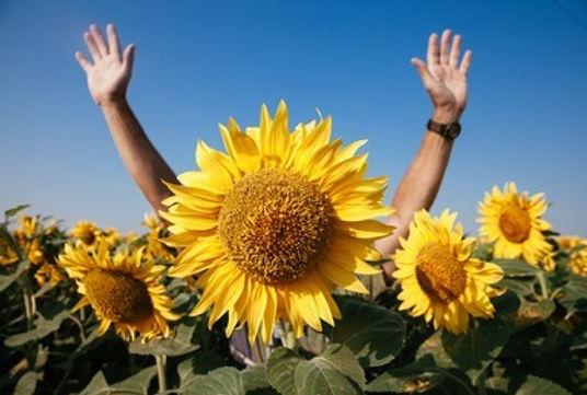 sunflower photo for site.jpg