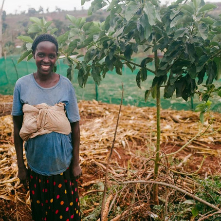 Kitchen Gardens, Composting and Organic Farming in a Ugandan Refugee Settlement