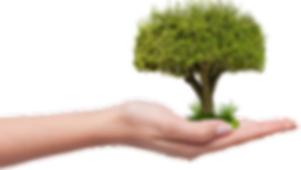 Planting-a-Tree1.png