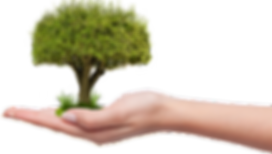 Planting-a-Tree.png