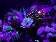 Event_00009_ONIF2019_Fluro_Glow_Collabor