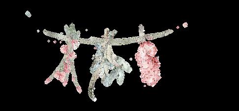 fleurs à sécher.png