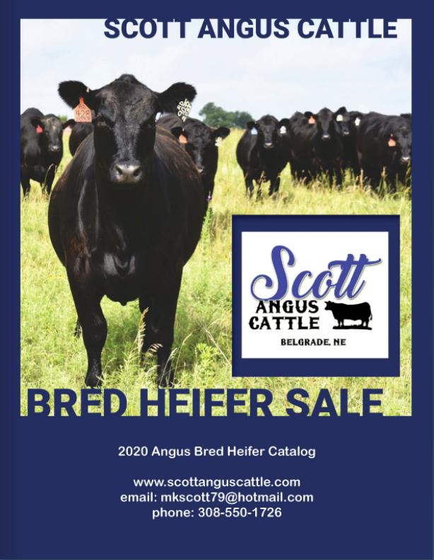 Bred Heifer Sale Flyer.PNG
