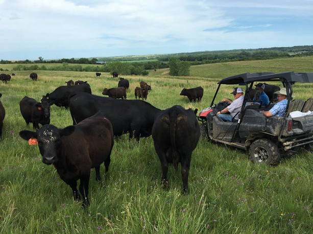 Cattle Tours