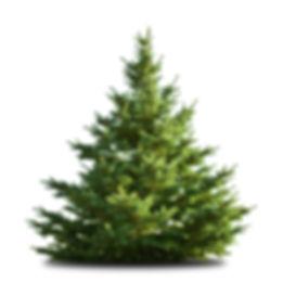 Yorkshire Moors Christmas Trees