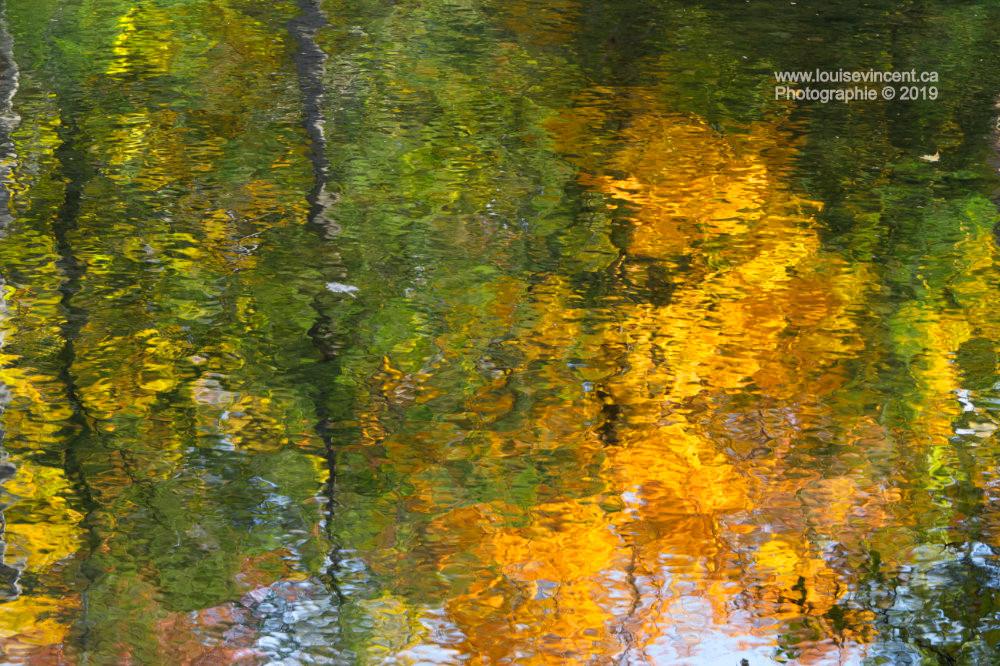 Forêt multicolore