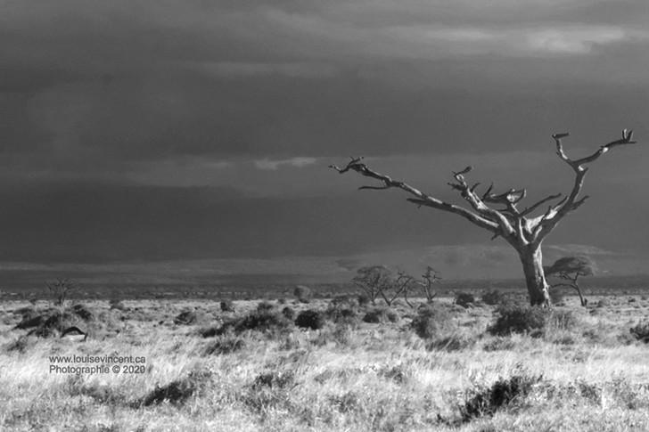Explorez avec moi la savane africaine